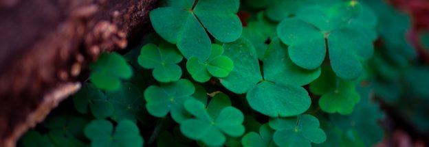 4 Lucky Social Media Campaigns Winning St Patrick's Day | Limitless Digital - web design Doncaster